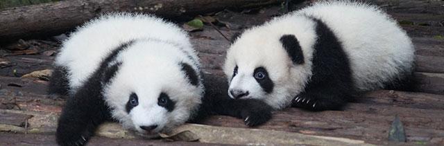 teach.fm pandas